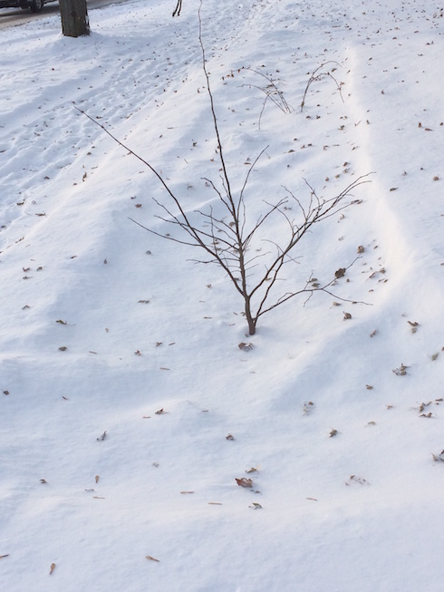 Photo of rain garden showing leaves scattered over snow.